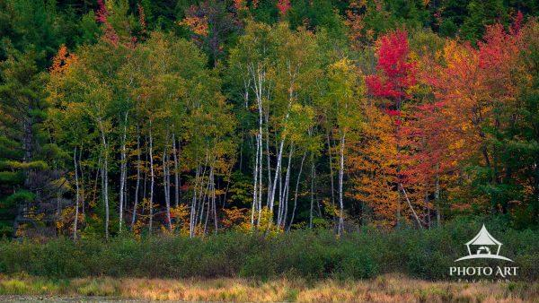 Beaver Dam Pond in full Autumn Glory