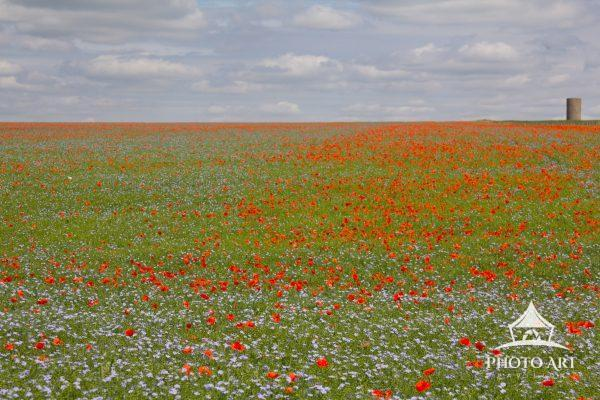 Stonehenge Poppies