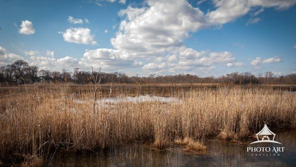 Beautiful day to overlook the marshlands of Seatuck National Wildlife Refuge.