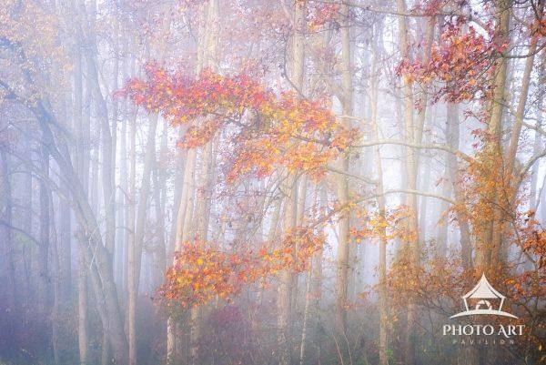 Early morning mist against the trees with vibrant fall colors in November at Bombay Hook Wildlife