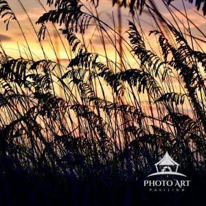 The morning sun rises beyond the beach grass