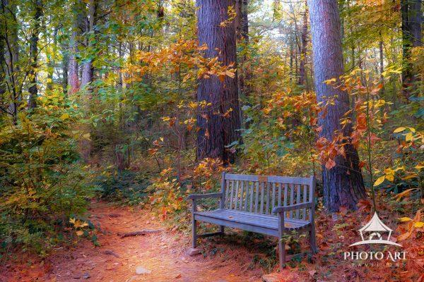 Beautiful place to sit and enjoy the bright colors of the Long Island autumn foliage. Color