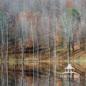 Tree reflecting off the water of the Delaware Water Gap in autumn. Fall foliage. Color photograph.