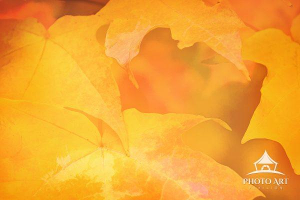 Orange and yellow fall leaves in abstract, artistic design.