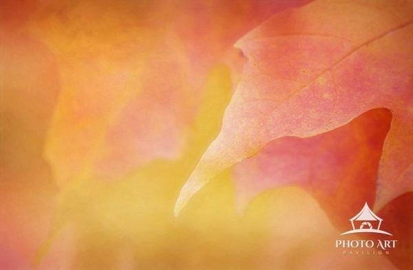 Abstract art of a leaf in fall in magenta, orange and yellow colors.