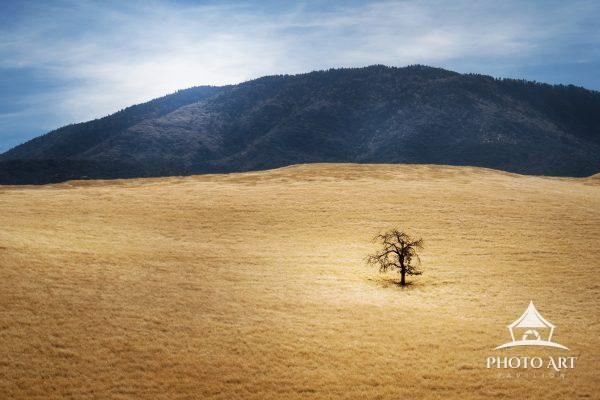 One simple, lonely tree standing on a hill. Color photograph.