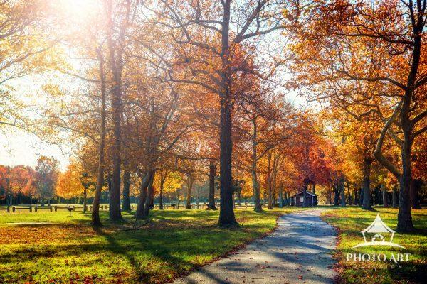 Gorgeous and bright colored autumn leaves on tall trees along a bicycle path. Suffolk County, NY on