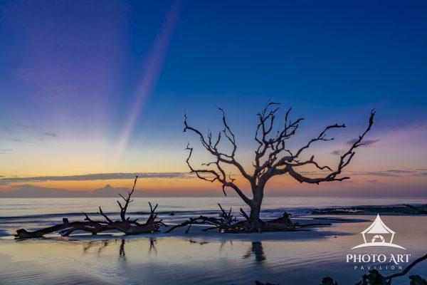 A beautiful sunrise frames petrified trees on a pristine beach.