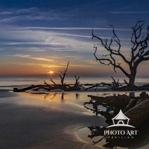 A serene sunrise reveals an unblemished beach framed with petrified live oak trees.