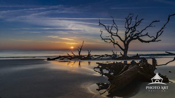 A serene sunrise reveals an unblemished beach framed with petrified live oak trees.