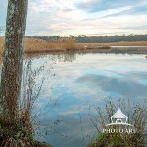 Wertheim National Wildlife Refuge – Landscape in late fall