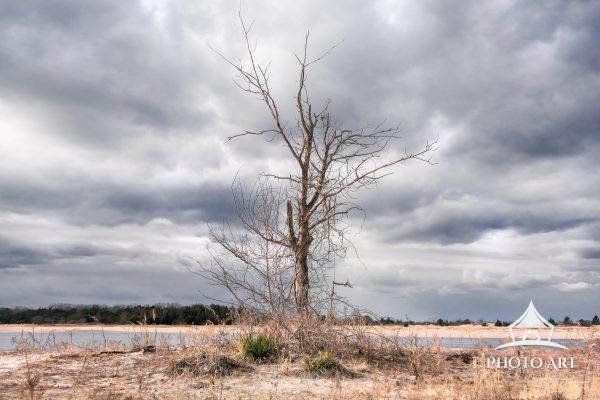 A single lone tree in the Winter, along the beach on the North Shore of Long Island, NY. Color