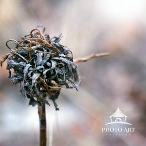 Lone little weed along the roadside, like an apocalypse of Whoville. Closeup of an interesting plant