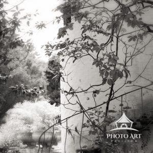 Black & White photo of a private garden