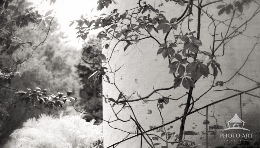 Black & White photo of a private garden