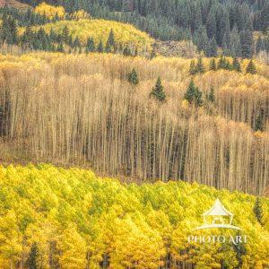 digital painting of aspen trees in Colorado