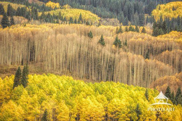 digital painting of aspen trees in Colorado