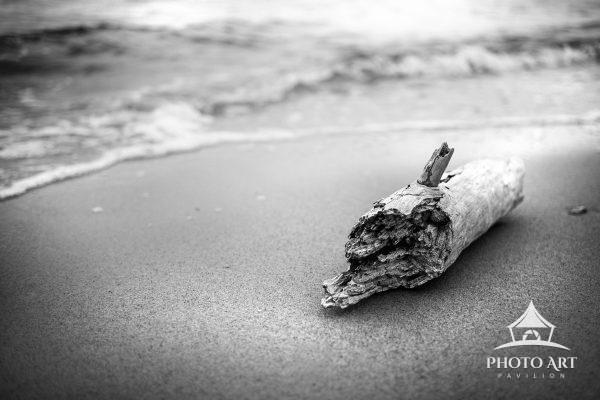 Driftwood laying along the shore of the Great South Bay near Heckscher State Park, while waves