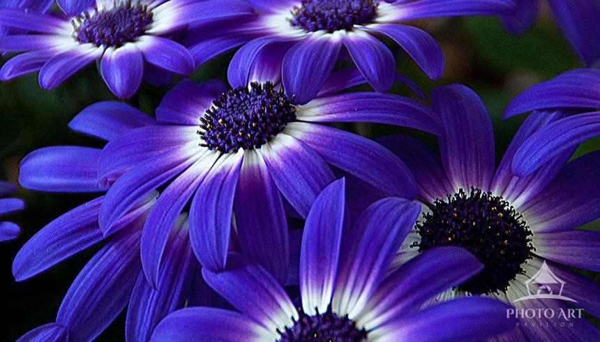 Grouped Purple and White Flowers