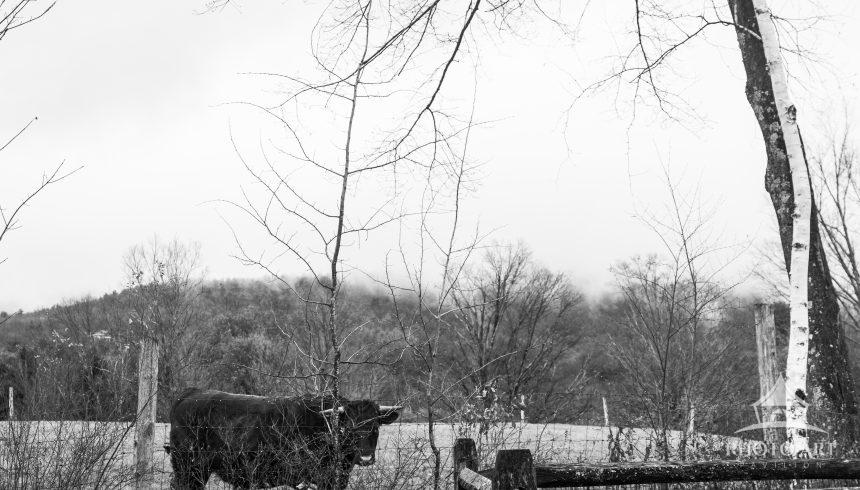 bearsville retreat b&w