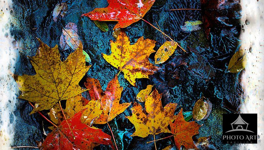 Autumn leaves surrounded by frost