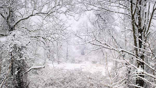 """Trees frame a """"window"""" view of fresh snow in rural setting in Chester County, Pennsylvania."""
