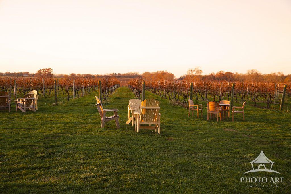 Golden Hour over Long Island Vineyard