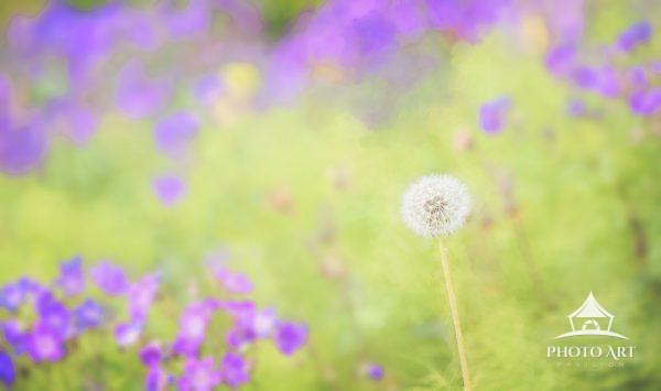A bright little dandelion stands out from a field of bright green and pink floral colors.