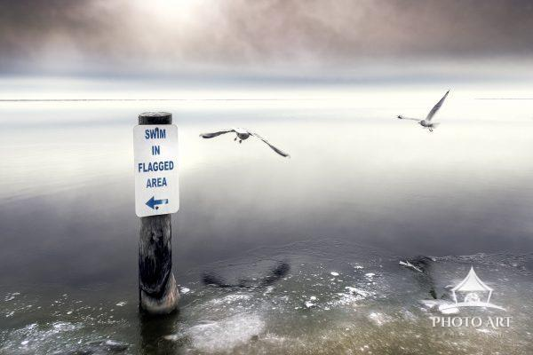 Two seagulls, flying over The Great South Bay as it begins to freeze. A sign directs swimmers where