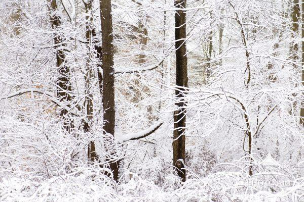 Elegance in nature with snow covered trees after Storm Orlena in Pennsylvania.