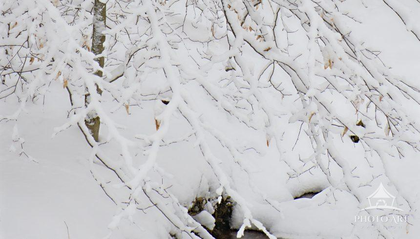 Snow covered tree next to small stream in woodland in Pennsylvania after Storm Orlena.