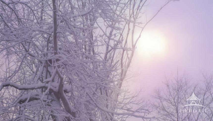 Vertical of snow breaking out of clouds against snow covered trees in Pennsylvania after Storm