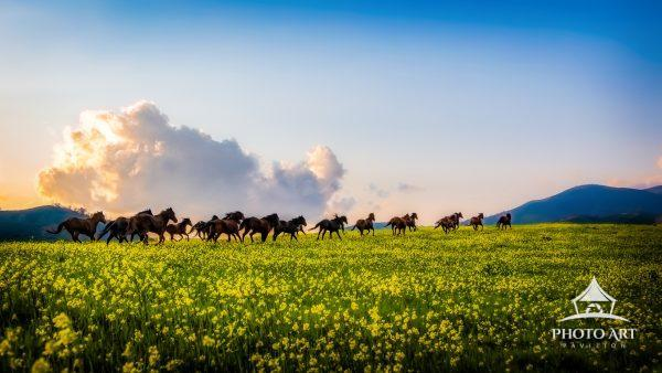 While out shooting on a working ranch in Parkfield, California, these horses run free through the