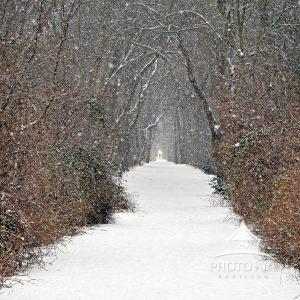 A simple pathway covered in snow pulls your eye  to the end of the path where we see a man walking.