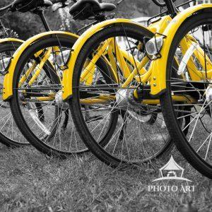 Yellow bikes in aligned in a repeating pattern, BW image except for yellow.