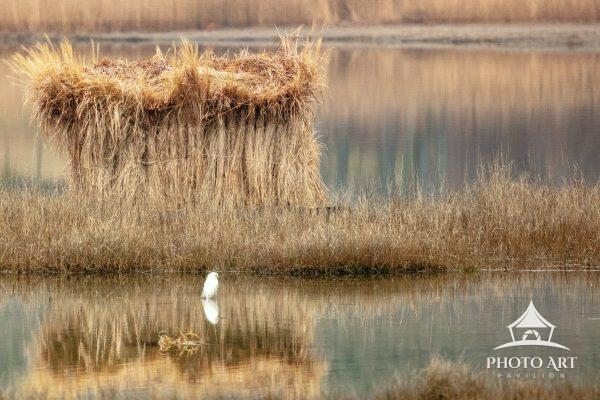 Crane in front of a reed covered duck blind