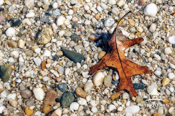 A leaf along the rocky shore. Color photograph.