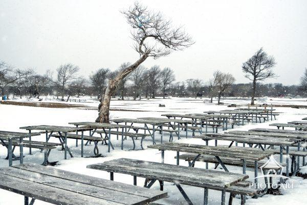 Picnic tables and tree amongst the snowy scenery of an off-season park. Color photography.