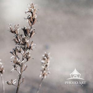 Close-up of dried flowers and leaves in the winter time. Color Photograph.