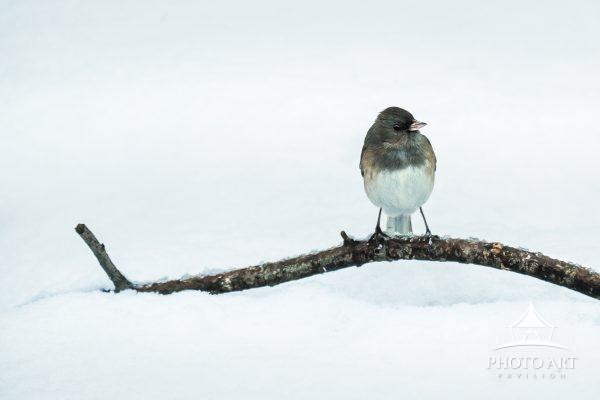 Little bird sitting on a branch in the snow. Color photograph.