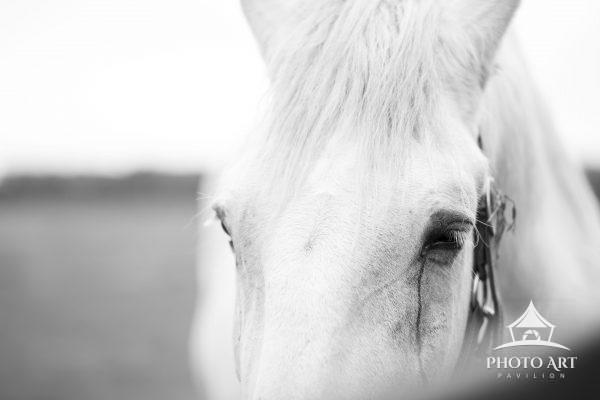 Horses in field in Riverhead, NY.  10/18.