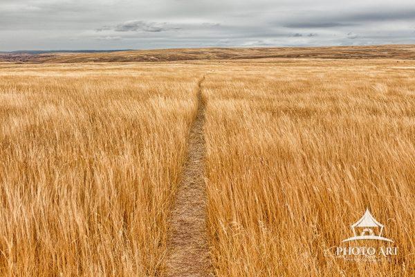 A walking trail leads through the tall grassland of the Zumwalt Prairie Preserve in a remote corner