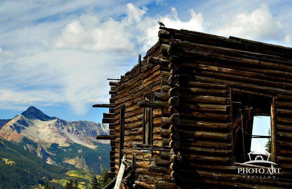 A Gray Jay perches on top of an abandoned miners cabin in Alta Lakes , Telluride Colorado