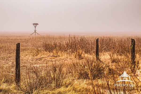 A thick spring fog created beautifully diffuse light across the salt marsh to the Osprey nest.