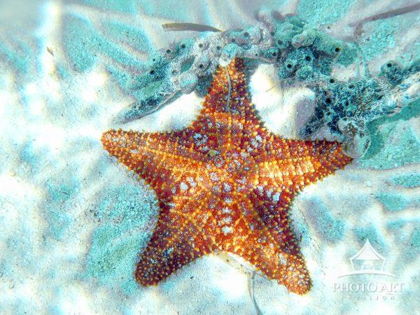Clear water shows up starfish on the bottom.